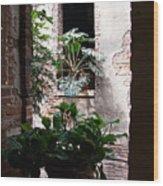 Window Plants Wood Print