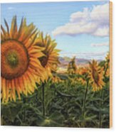 Window To The Sunflower Fields Oil Painting Wood Print