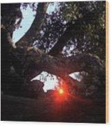 Window Tree Wood Print