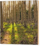 Windsor Trail At Dusk - Santa Fe National Forest New Mexico Wood Print