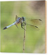 Windswept Dragonfly Wood Print