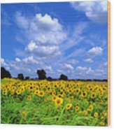 Windswept Field And Sky Wood Print