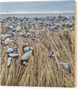 Windswept Grass At Lawrencetown Beach, Nova Scotia Wood Print