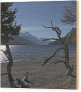 Windswept Wood Print
