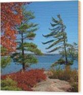 Windswept Point In Killbear Wood Print