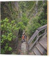 Windy Canyon Great Barrier Island New Zealand Wood Print