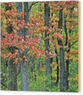 Windy Day Autumn Colors Wood Print