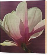 Wine And Cream Magnolia Blossom Wood Print