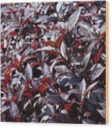 Wine Colored Plants,  Wood Print
