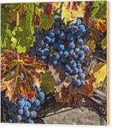 Wine Grapes Napa Valley Wood Print