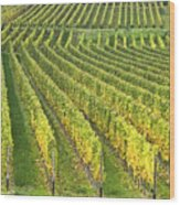Wine Growing Wood Print