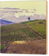 Wine Vineyard In Sicily Wood Print