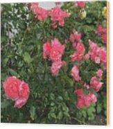 Winery Roses  Wood Print