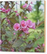 Wines And Rose Weigela Wood Print