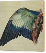 Wing Of A Blue Roller Wood Print