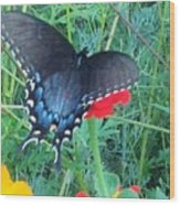 Wing Spread Butterfly Wood Print
