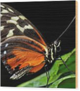 Wing Texture Of Eueides Isabella Longwing Butterfly On A Leaf Ag Wood Print
