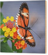 Winged Tiger Wood Print