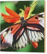 Wings 9 Wood Print