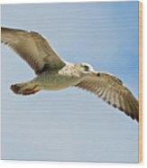 Wings Aloft Wood Print