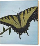 Wings Are Perfect Match - Eastern Tiger Swallowtail Wood Print