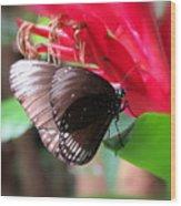 Wings Of Brown - Butterfly Wood Print