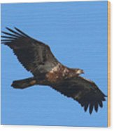 Wings Of Eagles Wood Print by Karen Lindquist