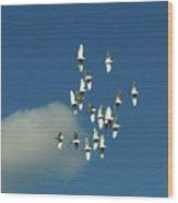 Wings Of White Wood Print