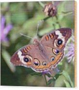 Wings Of Wonder - Common Buckeye Butterfly Wood Print
