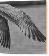 Wings Over Water Beach Pictures Black And White Seagull Wood Print