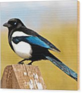 Winking Magpie Wood Print