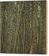Winner Creek Trail Wood Print
