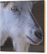 Winsome Goat Wood Print