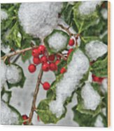 Winter - Ice Coated Holly Wood Print