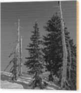 Winter Alpine Trees, Mount Rainier National Park, Washington, 2016 Wood Print