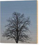 Winter Bare Wood Print