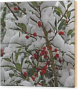 Winter Berries In Watercolor Wood Print