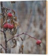 Winter Berries No.2 Wood Print