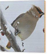 Winter Berry Treat Wood Print