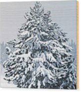Winter Blanket Wood Print