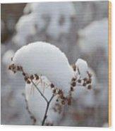 Winter Bloom Wood Print