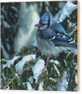 Winter Blue Jay Wood Print