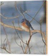 Winter Bluebird Art Wood Print
