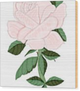 Winter Blush Rose Wood Print