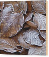 Winter Brown Leaves Powdered With Frost Wood Print