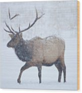 Winter Bull Wood Print by Mike  Dawson