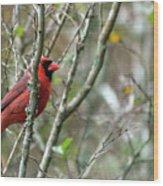 Winter Cardinal Sits On Tree Branch Wood Print