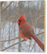 Winter Cardinal Wood Print