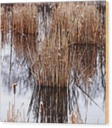 Winter Cattails Wood Print