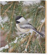 Winter Chickadee Wood Print